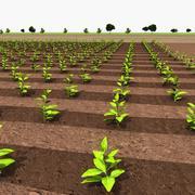 Сельскохозяйственные полевые культуры 3d model