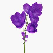 Purple Freesia Flower 3d model