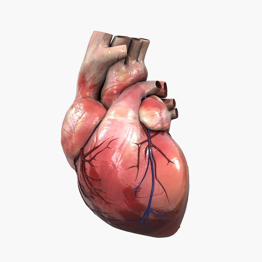 Animowane ludzkie serce royalty-free 3d model - Preview no. 1