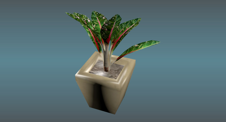 Indoor Plant royalty-free 3d model - Preview no. 9