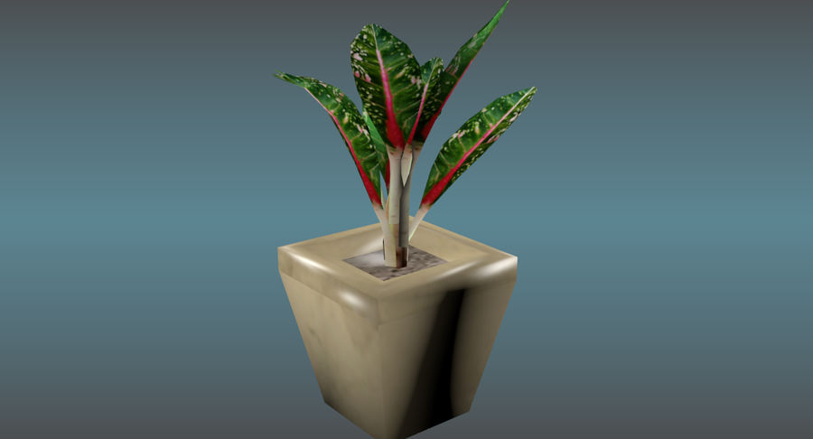 Indoor Plant royalty-free 3d model - Preview no. 10