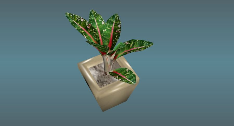 Indoor Plant royalty-free 3d model - Preview no. 8