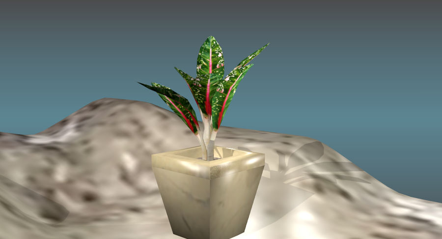 Indoor Plant royalty-free 3d model - Preview no. 14