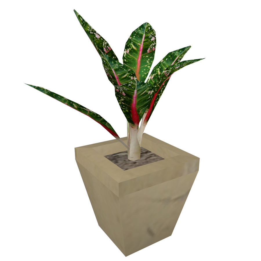 Indoor Plant royalty-free 3d model - Preview no. 1