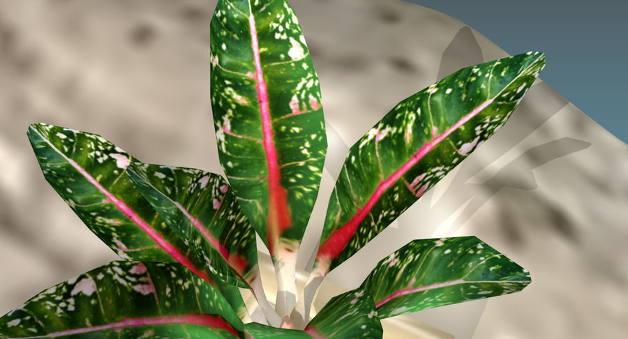 Indoor Plant royalty-free 3d model - Preview no. 13