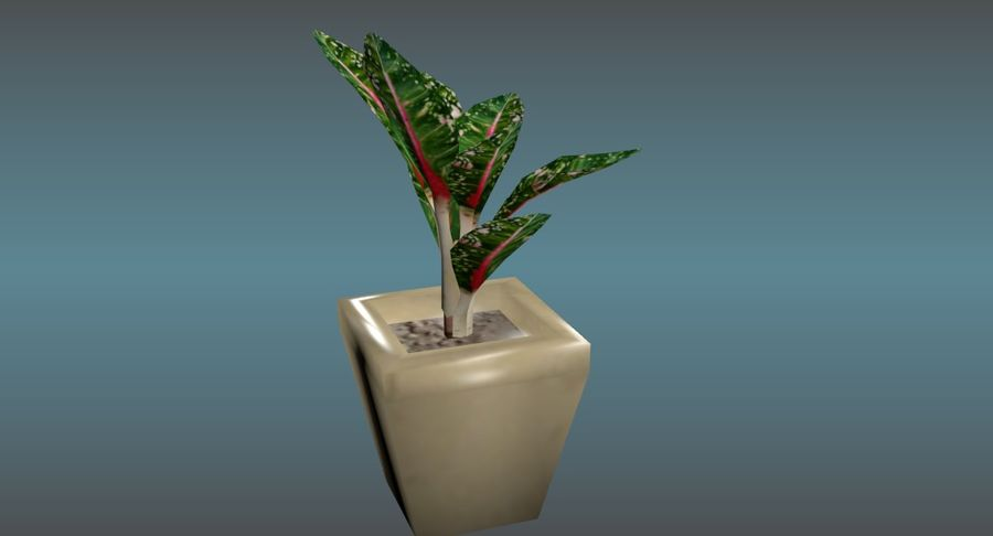 Indoor Plant royalty-free 3d model - Preview no. 7