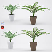Aglaonema 3d model