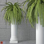 관엽 식물 6 3d model
