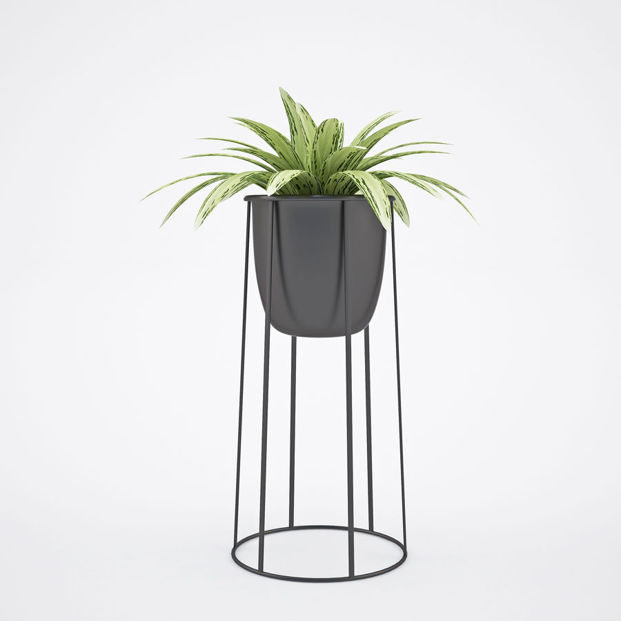 House plant 2 royalty-free 3d model - Preview no. 5