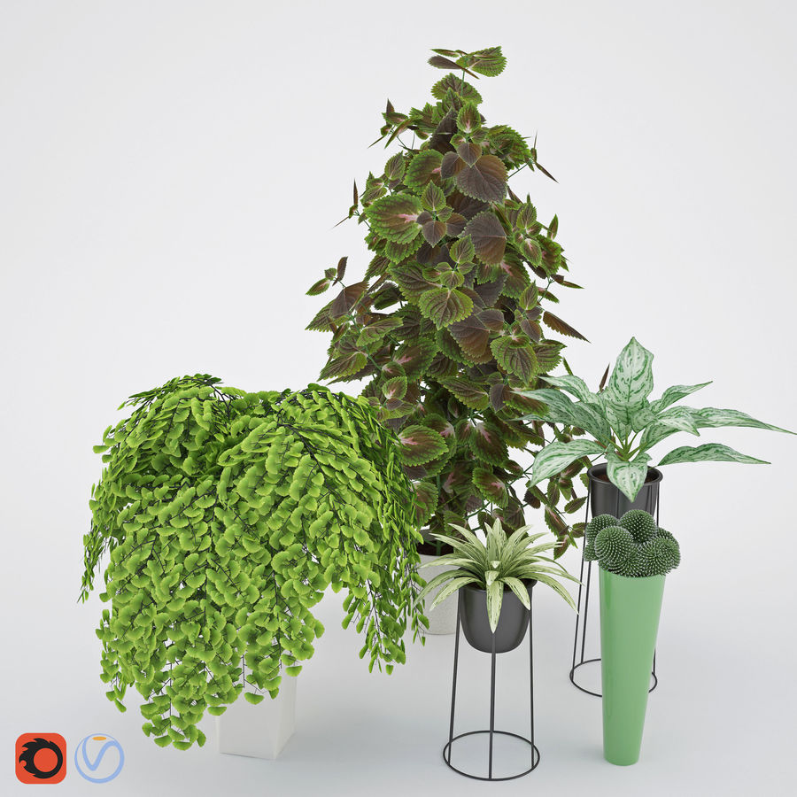 House plant 2 royalty-free 3d model - Preview no. 1
