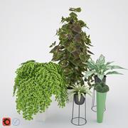 집 식물 2 3d model