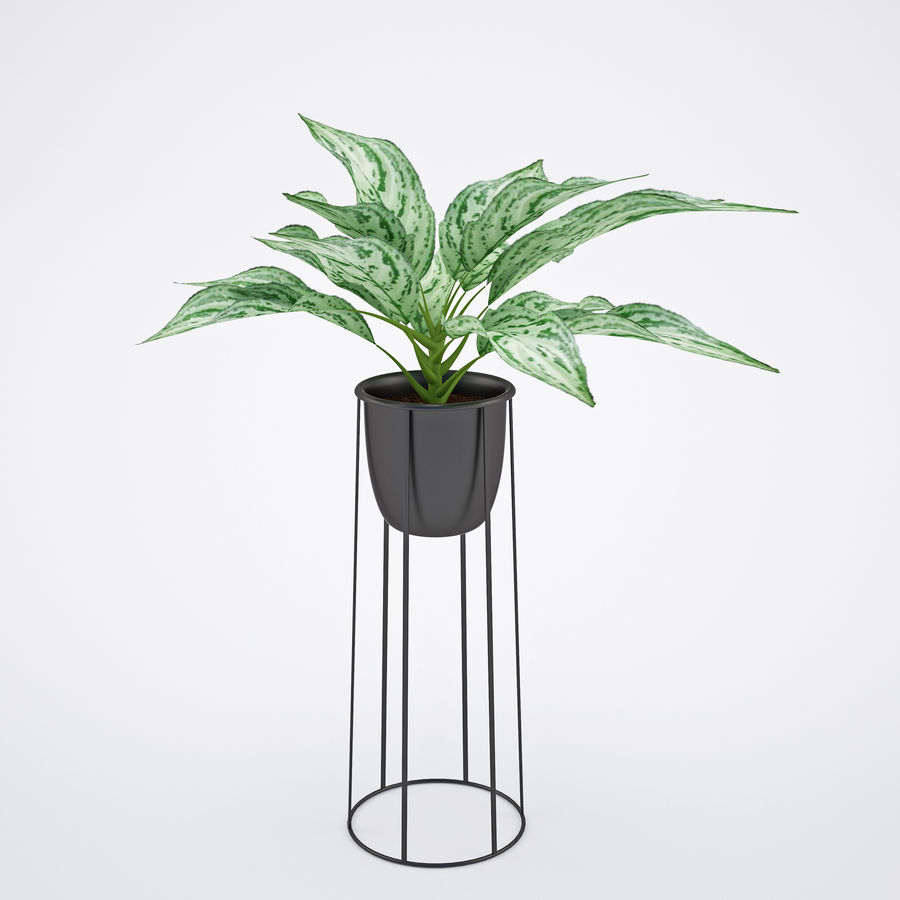 House plant 2 royalty-free 3d model - Preview no. 4