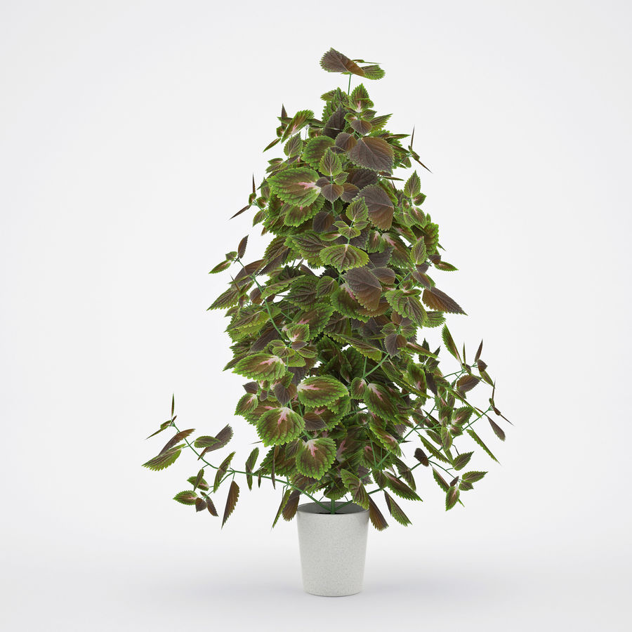 House plant 2 royalty-free 3d model - Preview no. 2