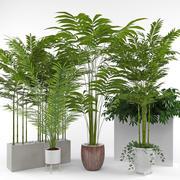Комнатное растение 3 3d model