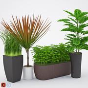 Houseplant 7 3d model