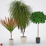 Houseplant 8 3d model
