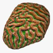 뇌 산호 3d model