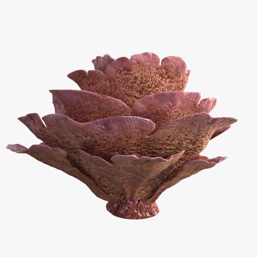 coral scroll royalty-free 3d model - Preview no. 8