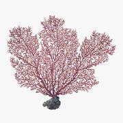 fan coral_v2 3d model
