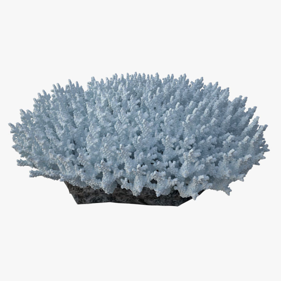 коралл acropora_v5 royalty-free 3d model - Preview no. 3