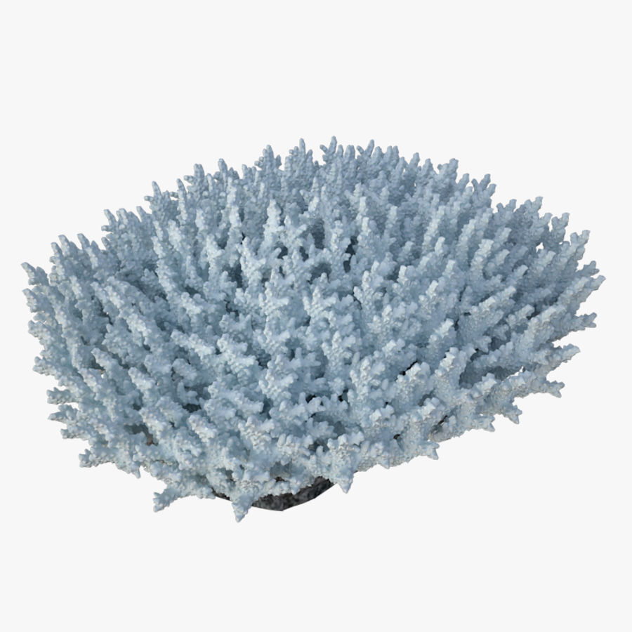 коралл acropora_v5 royalty-free 3d model - Preview no. 2