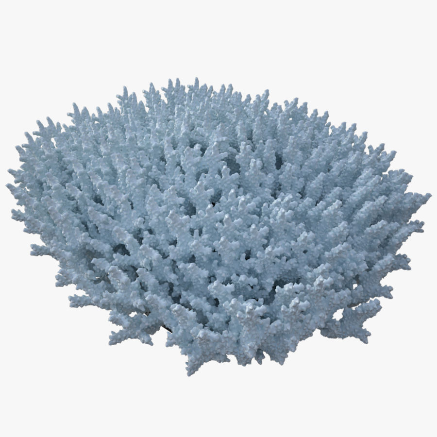 коралл acropora_v5 royalty-free 3d model - Preview no. 6