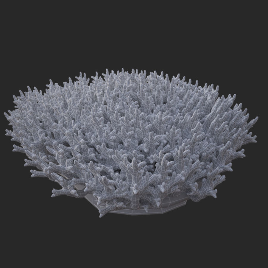 acropora_v5 de corail royalty-free 3d model - Preview no. 15