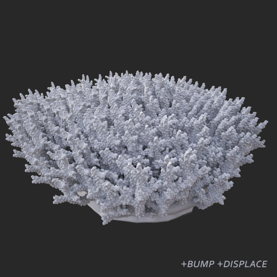 коралл acropora_v5 royalty-free 3d model - Preview no. 20