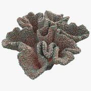 珊瑚蘑菇 3d model