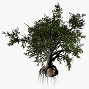 High Broadleaf Tree 3d model