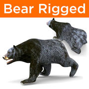 Black Bear Rigged 3d model