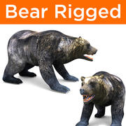 Bear Rigged game ready 3d model