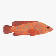 Koralowy Grouper 3d model