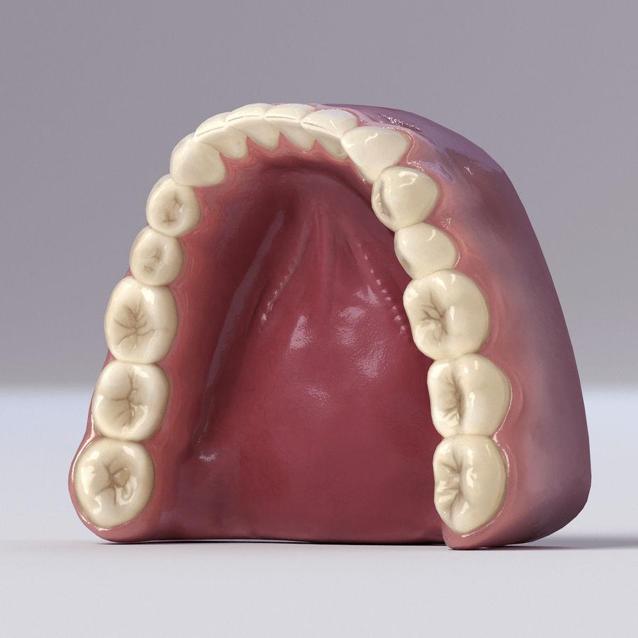 牙齿和牙龈 royalty-free 3d model - Preview no. 37