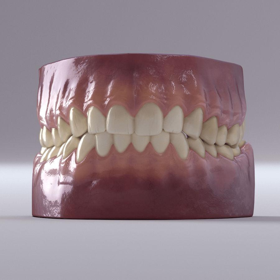 牙齿和牙龈 royalty-free 3d model - Preview no. 34