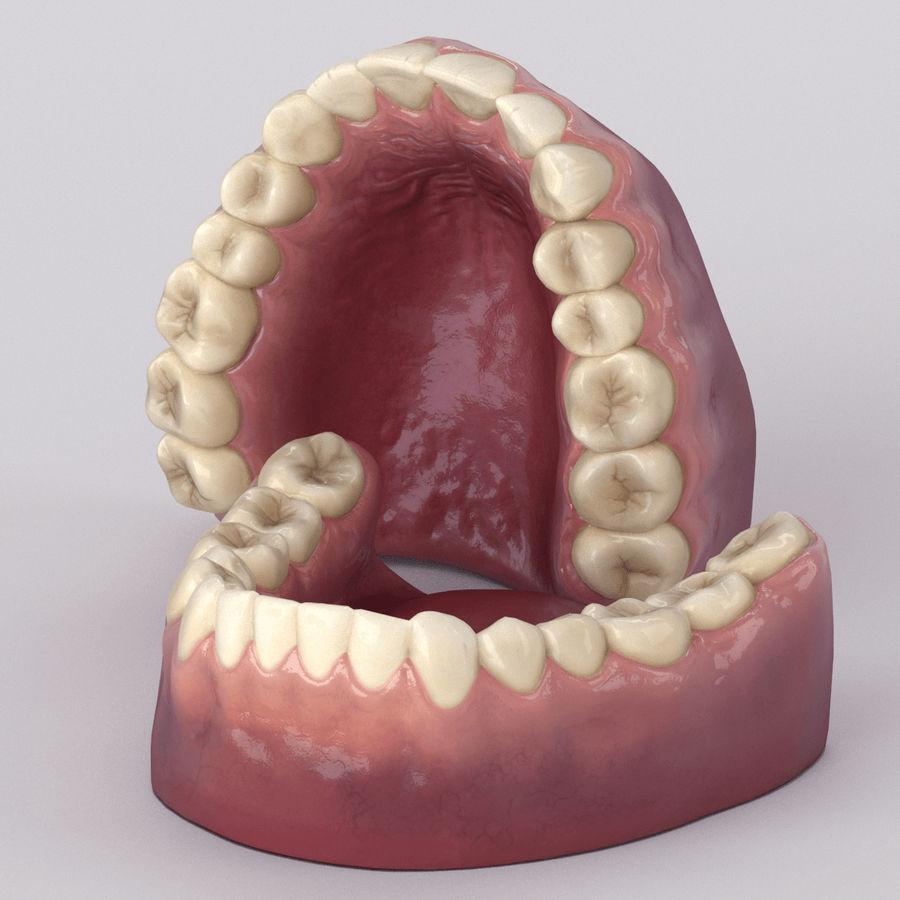 牙齿和牙龈 royalty-free 3d model - Preview no. 31