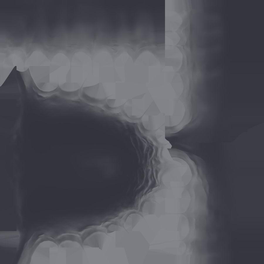 牙齿和牙龈 royalty-free 3d model - Preview no. 22