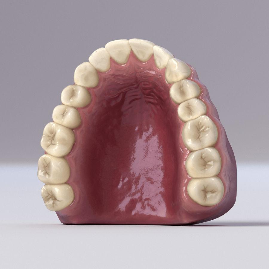 牙齿和牙龈 royalty-free 3d model - Preview no. 36