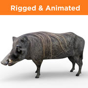 Poils de sanglier Rigged & Animated 3d model