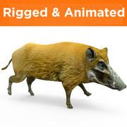 野猪索具动画 3d model