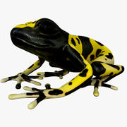 Yellow-Banded Poison Dart Frog 3d model