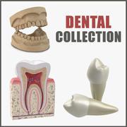 Dental Collection 3d model