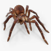 Bird Eating Spider Walking Pose with Fur 3D 모델 3d model