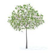 Cerejeira com Flores Modelo 3D 3.3m 3d model