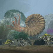 Ammonite with complete underwater scene 3d model