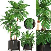 Коллекция растений пальм 3d model