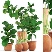 Colección de plantas Ficus árboles modelo 3d