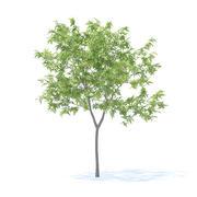 Peach Tree Modello 3D 2.3m 3d model
