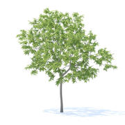 Peach Tree Modello 3D 3m 3d model