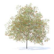 Peach Tree modello 3d. Altezza: 7,5 m 3d model